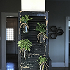 Four mason jars filled with herbs hang from an old shutter, creating a decorative but functional indoor herb garden